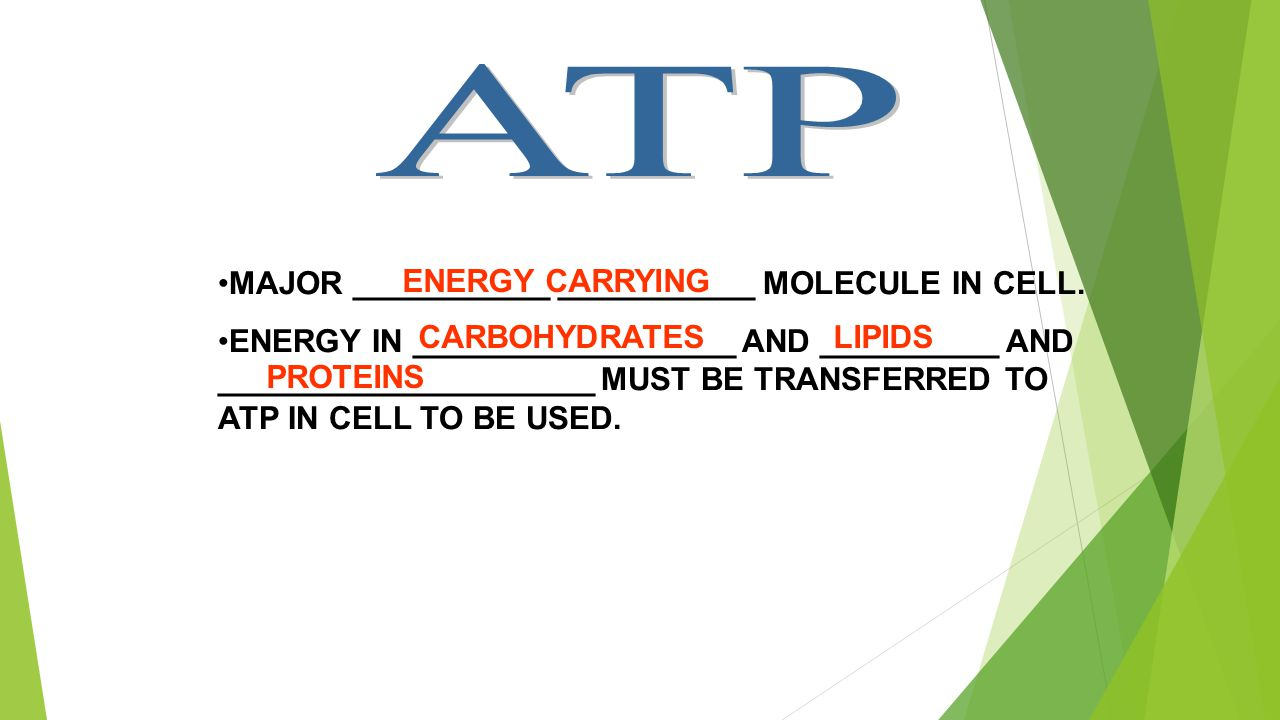 MAJOR ___________ ___________ MOLECULE IN CELL. ENERGY IN __________________ AND __________ AND _____________________ MUST BE TRANSFERRED TO ATP IN CE