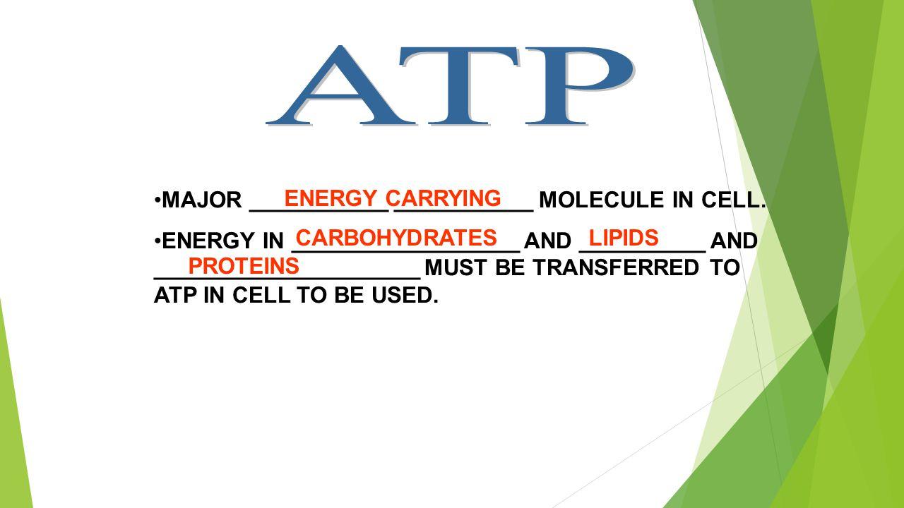 MAJOR ___________ ___________ MOLECULE IN CELL.