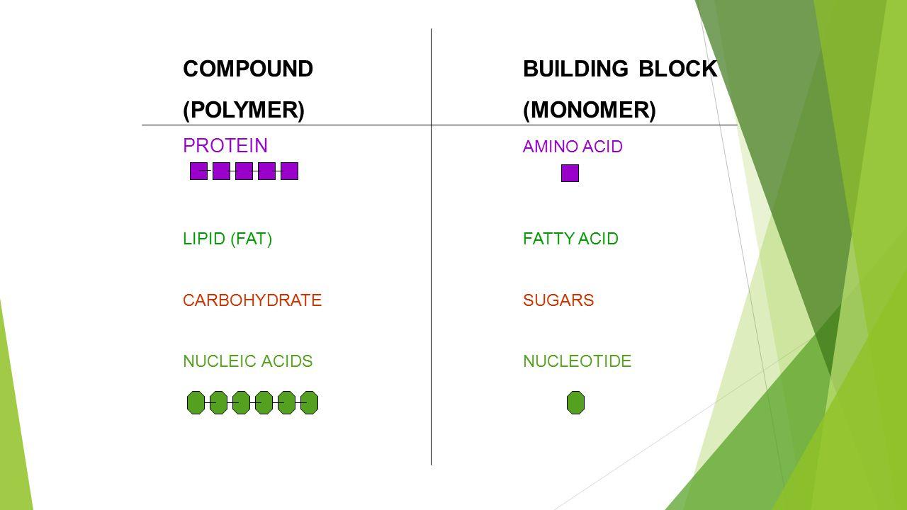 COMPOUNDBUILDING BLOCK (POLYMER)(MONOMER) PROTEIN AMINO ACID LIPID (FAT)FATTY ACID CARBOHYDRATESUGARS NUCLEIC ACIDSNUCLEOTIDE