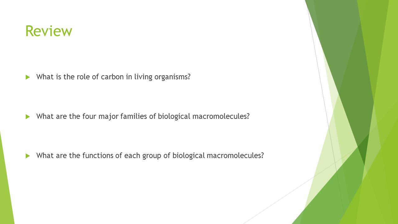 Review  What is the role of carbon in living organisms?  What are the four major families of biological macromolecules?  What are the functions of