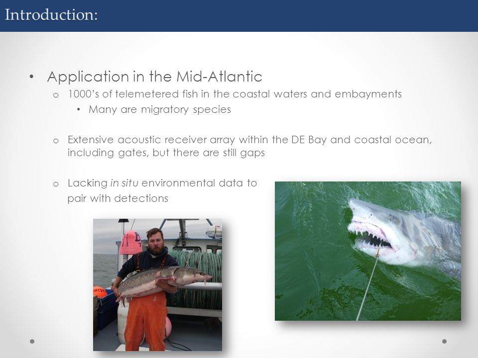 Introduction: Application in the Mid-Atlantic o 1000's of telemetered fish in the coastal waters and embayments Many are migratory species o Extensive acoustic receiver array within the DE Bay and coastal ocean, including gates, but there are still gaps o Lacking in situ environmental data to pair with detections