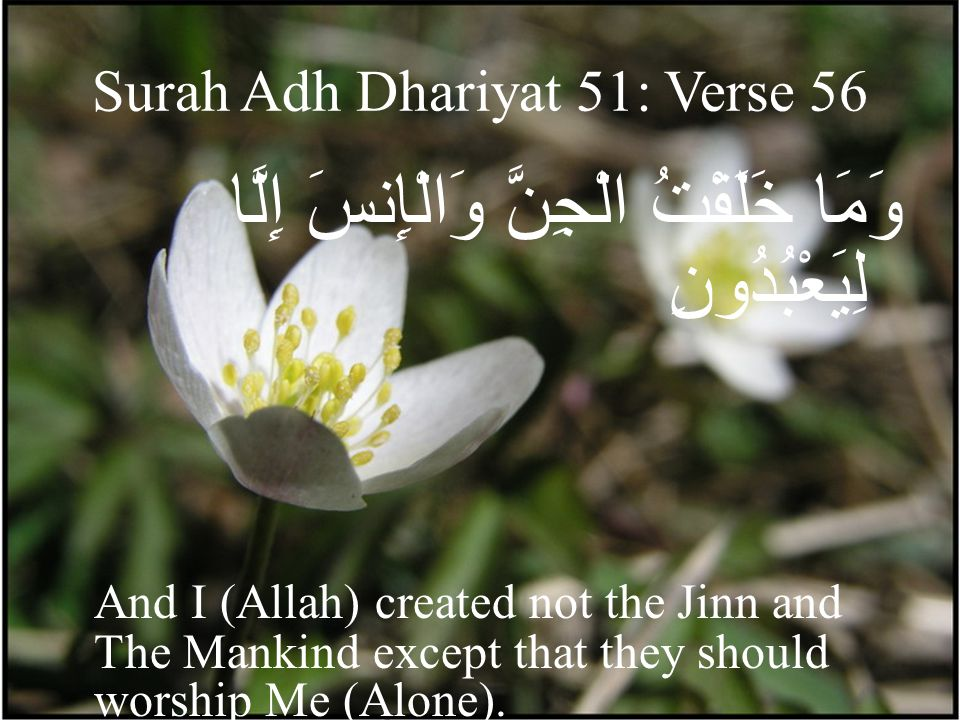 Surah Adh Dhariyat 51: Verse 56 وَمَا خَلَقْتُ الْجِنَّ وَالْإِنسَ إِلَّا لِيَعْبُدُونِ And I (Allah) created not the Jinn and The Mankind except that they should worship Me (Alone).