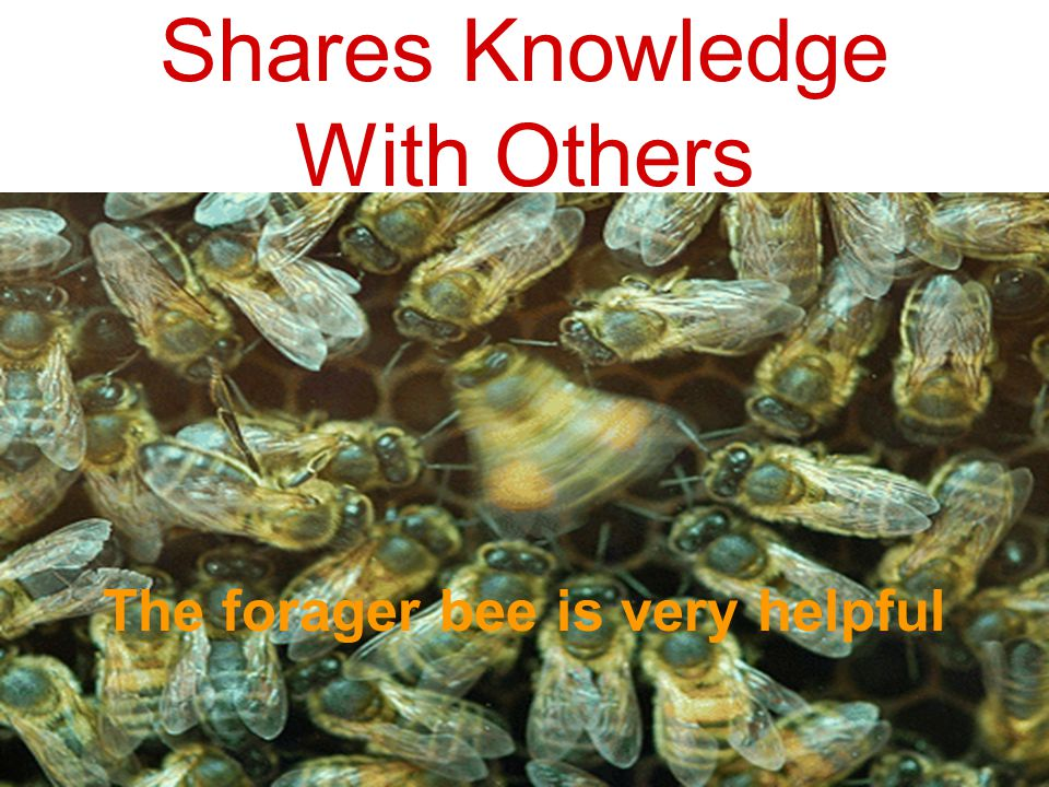 Shares Knowledge With Others The forager bee is very helpful