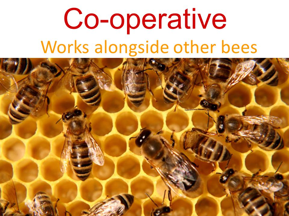 Co-operative Works alongside other bees