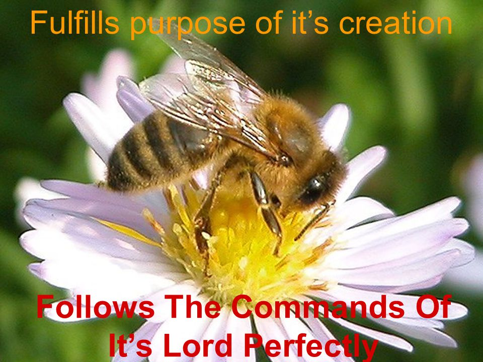 Follows The Commands Of It's Lord Perfectly Fulfills purpose of it's creation