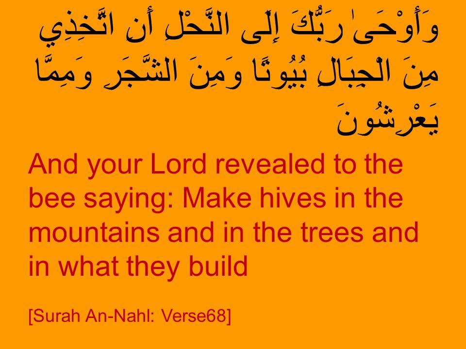 وَأَوْحَىٰ رَبُّكَ إِلَى النَّحْلِ أَنِ اتَّخِذِي مِنَ الْجِبَالِ بُيُوتًا وَمِنَ الشَّجَرِ وَمِمَّا يَعْرِشُونَ And your Lord revealed to the bee say