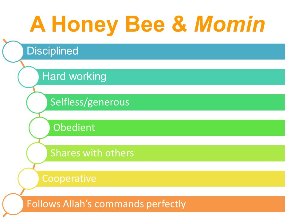 A Honey Bee & Momin Disciplined Hard working Selfless/generous Obedient Shares with others Cooperative Follows Allah's commands perfectly
