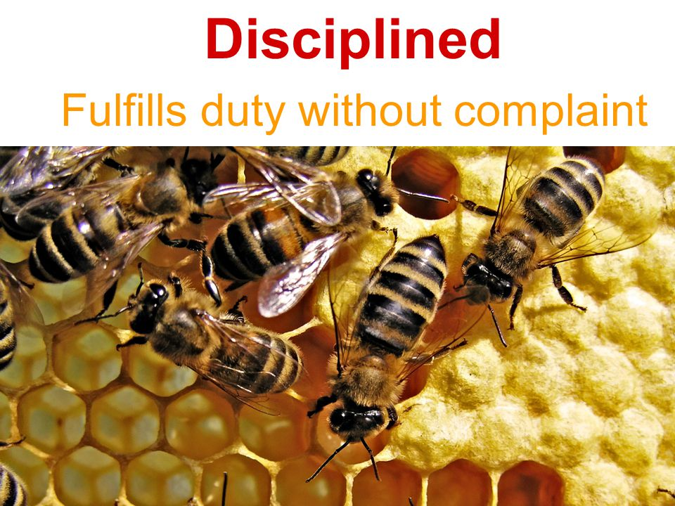Disciplined Fulfills duty without complaint