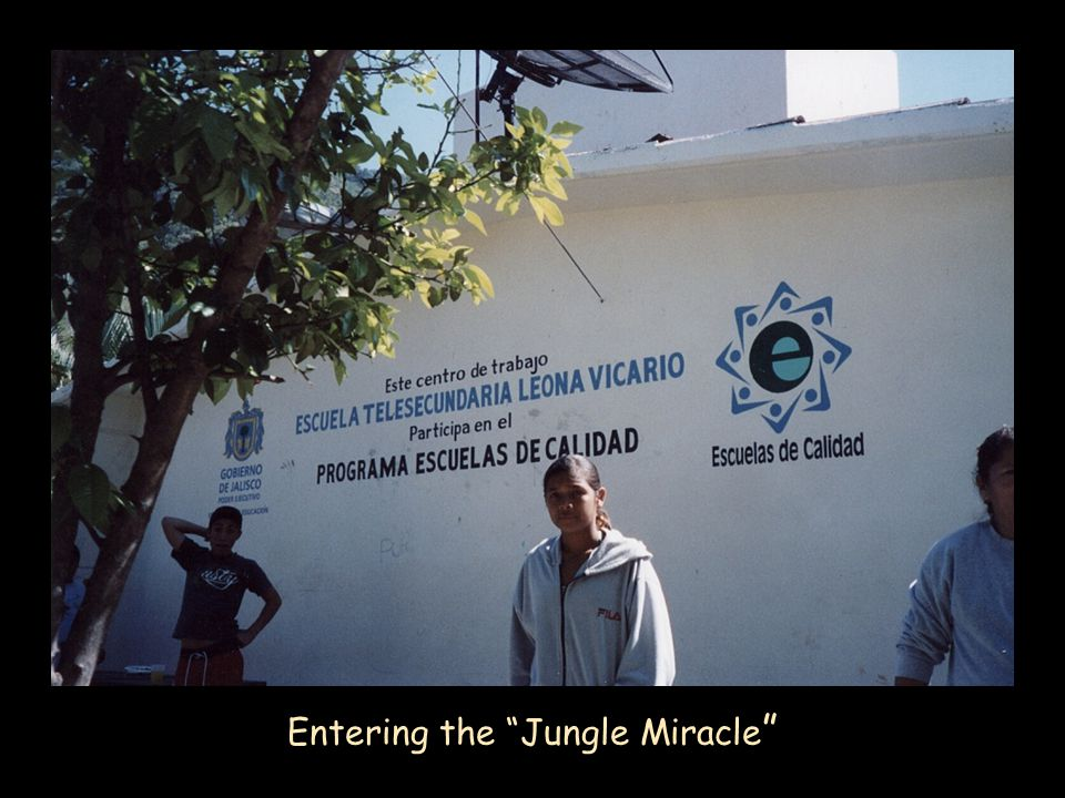 Entering the Jungle Miracle