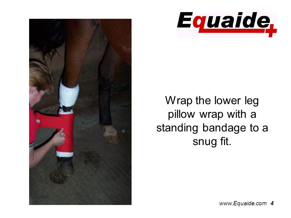 www.Equaide.com 4 Wrap the lower leg pillow wrap with a standing bandage to a snug fit.