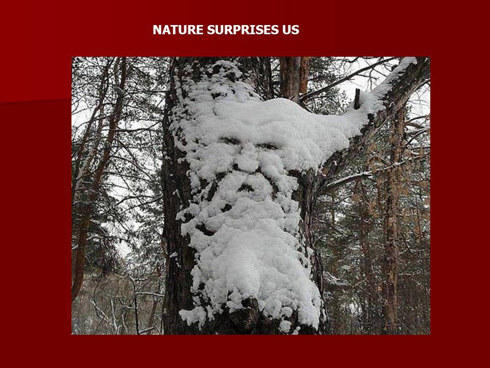 NATURE SURPRISES US