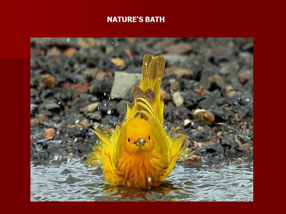 NATURE'S BATH