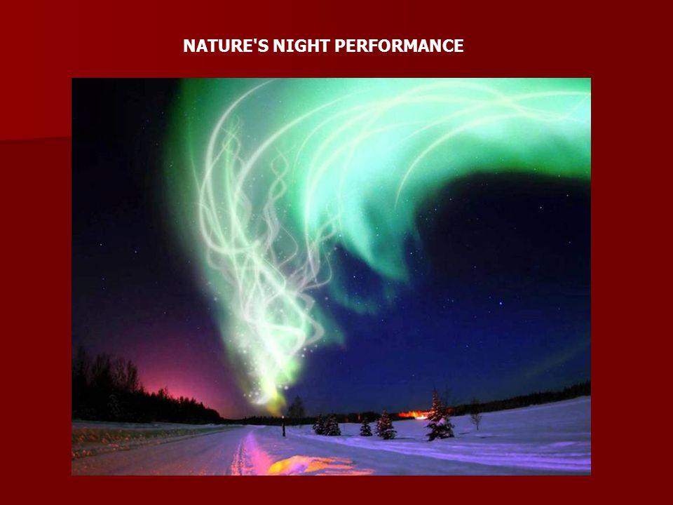 NATURE'S NIGHT PERFORMANCE