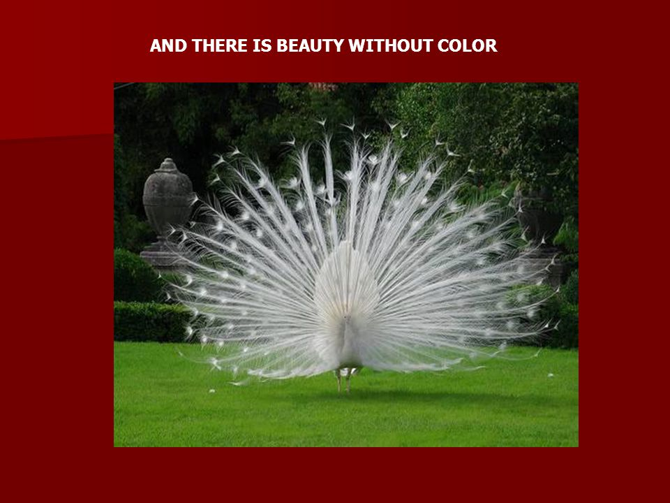 AND THERE IS BEAUTY WITHOUT COLOR