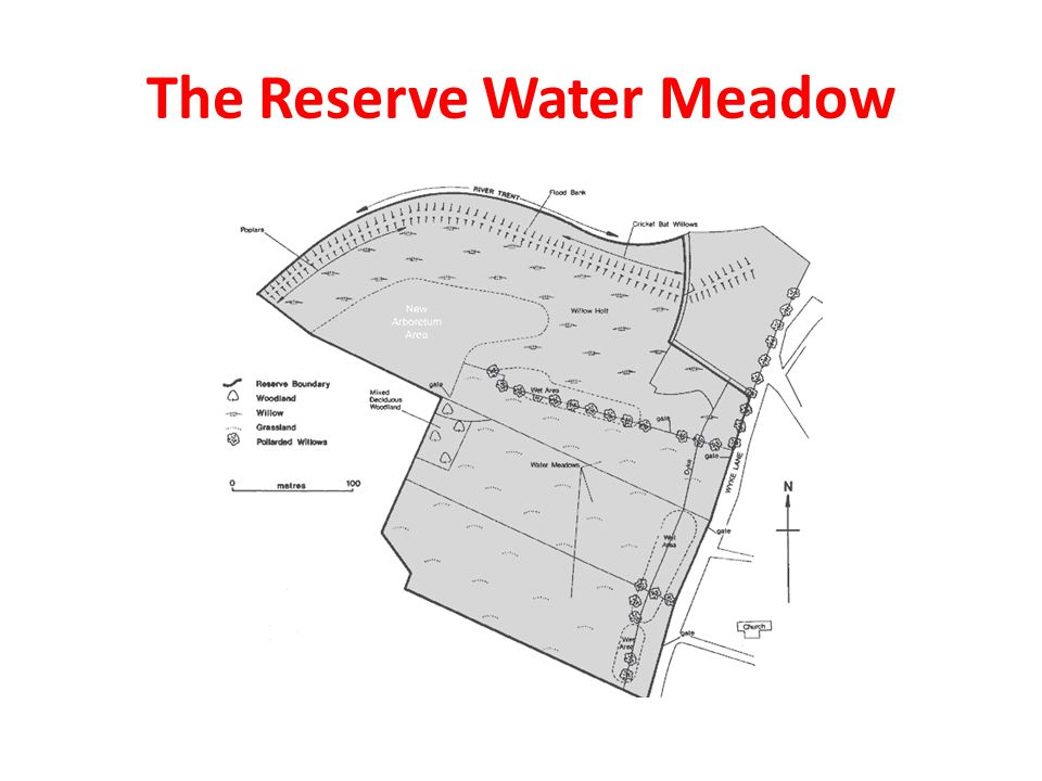 The Reserve Water Meadow