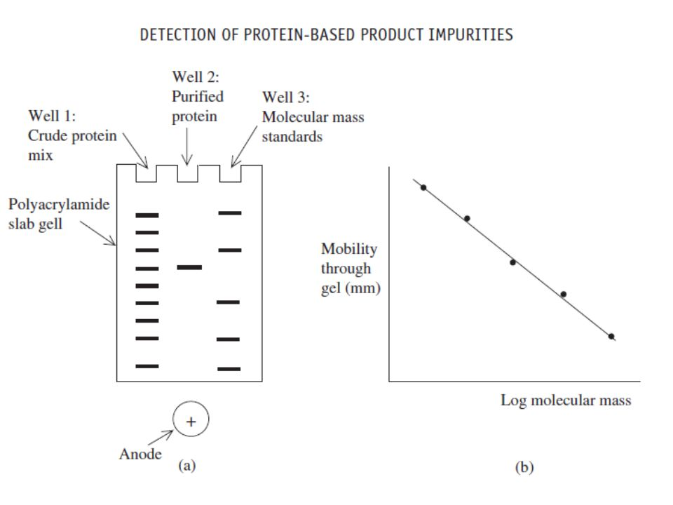 One concern relating to SDS-PAGE-based purity analysis is that contaminants of the same molecular mass as the product will go undetected as they will comigrate with it.