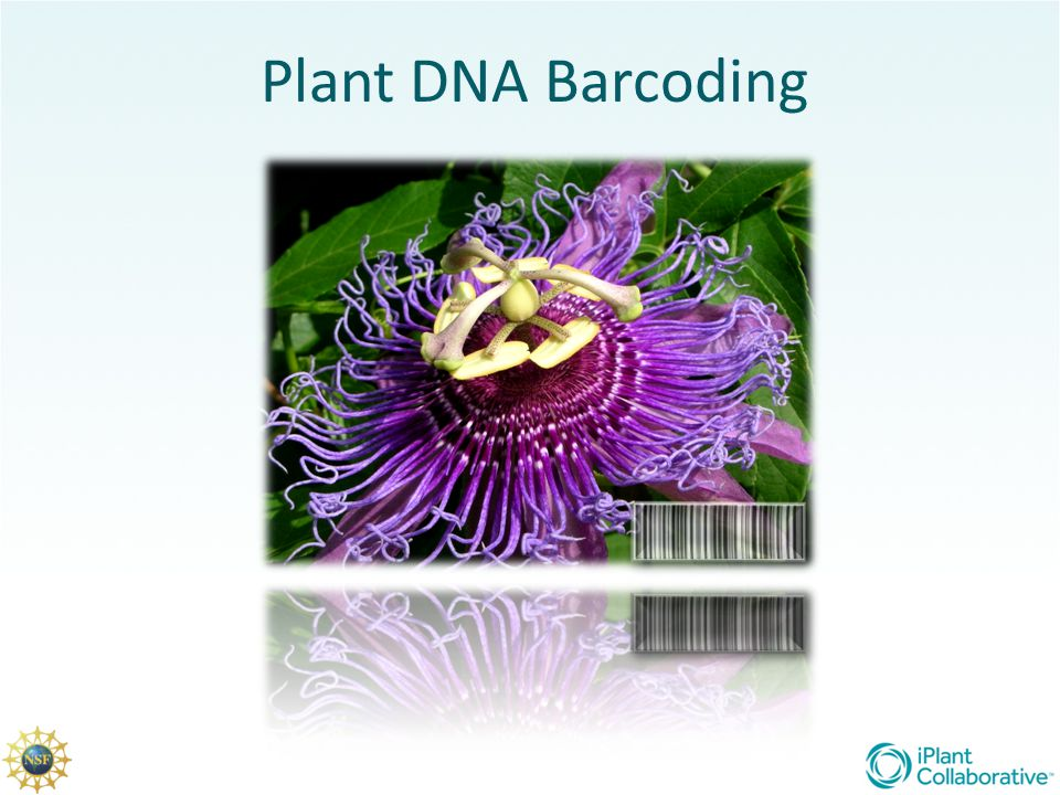 What is plant DNA barcoding and why is there a need for it?