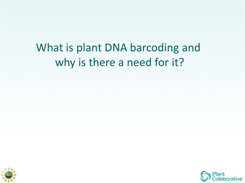 ACGAGTCGGTAGCTGCCCTCTGACTGCATCGAA TTGCTCCCCTACTACGTGCTATATGCGCTTACGAT CGTACGAAGATTTATAGAATGCTGCTACTGCTCC CTTATTCGATAACTAGCTCGATTATAGCTACGATG Plants are sampled DNA is extracted Barcode amplified Sequenced plant DNA is compared with sequences in a barcode database How Barcoding works