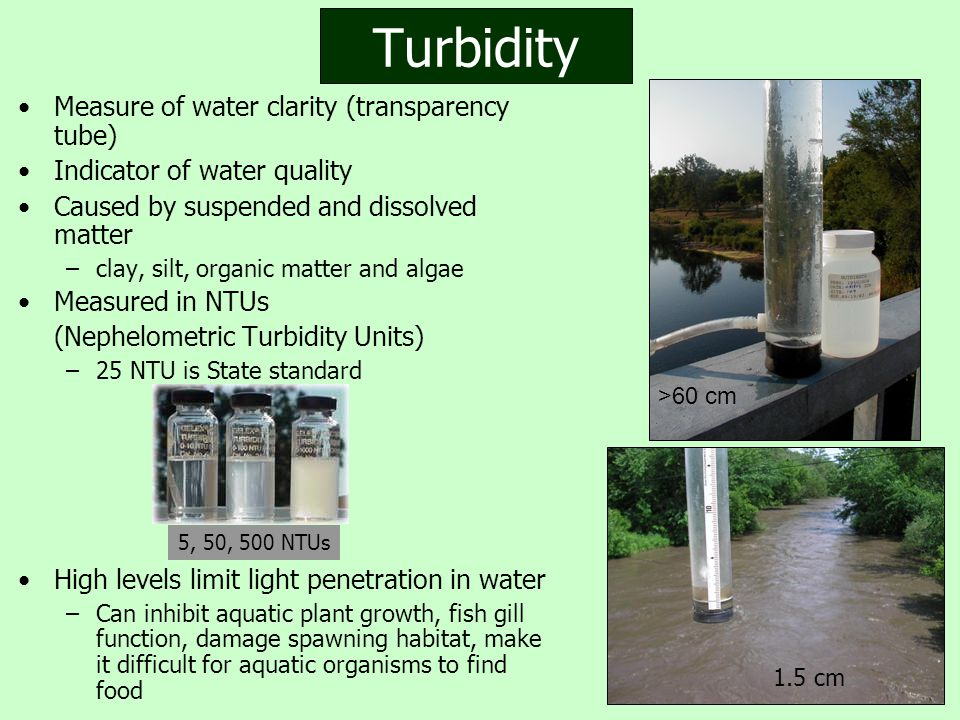 Turbidity Measure of water clarity (transparency tube) Indicator of water quality Caused by suspended and dissolved matter –clay, silt, organic matter and algae Measured in NTUs (Nephelometric Turbidity Units) –25 NTU is State standard High levels limit light penetration in water –Can inhibit aquatic plant growth, fish gill function, damage spawning habitat, make it difficult for aquatic organisms to find food 5, 50, 500 NTUs 1.5 cm >60 cm