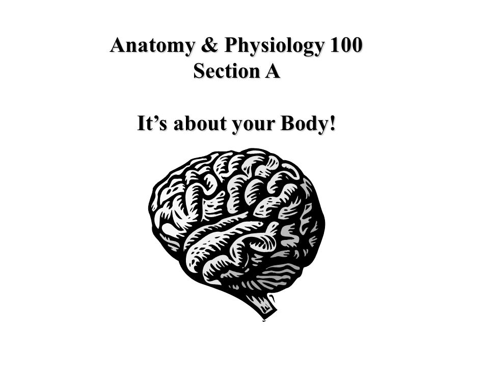 Anatomy & Physiology 100 Section A It's about your Body!
