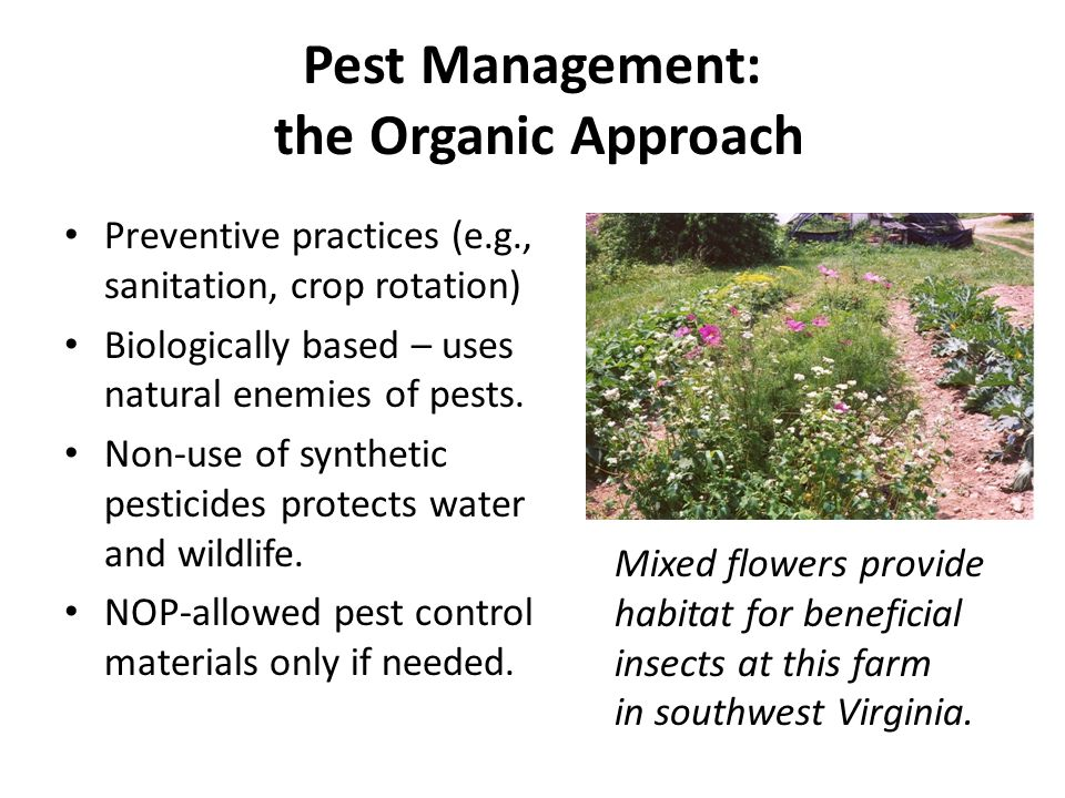 Pest Management: the Organic Approach Preventive practices (e.g., sanitation, crop rotation) Biologically based – uses natural enemies of pests.