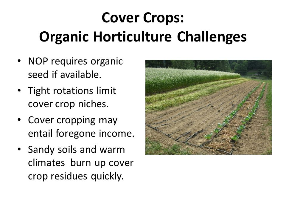 Cover Crops: Organic Horticulture Challenges NOP requires organic seed if available.