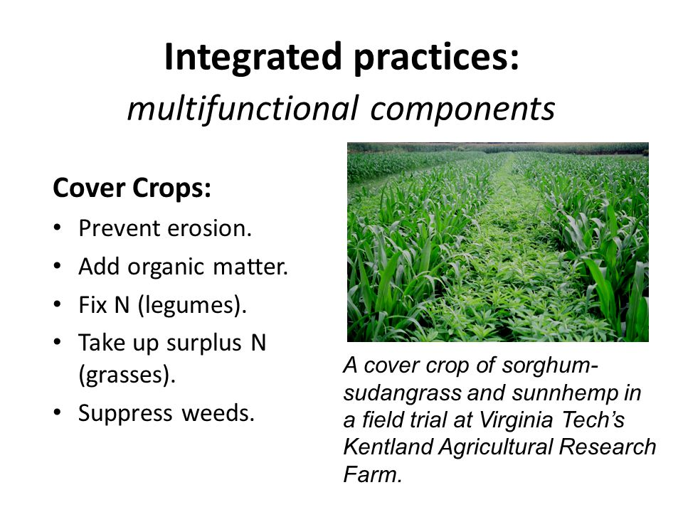 Integrated practices: multifunctional components Cover Crops: Prevent erosion.
