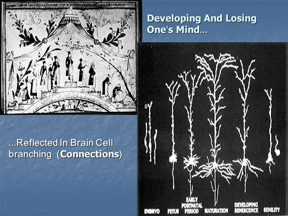 Developing And Losing One ' s Mind … … Reflected In Brain Cell branching ( Connections )