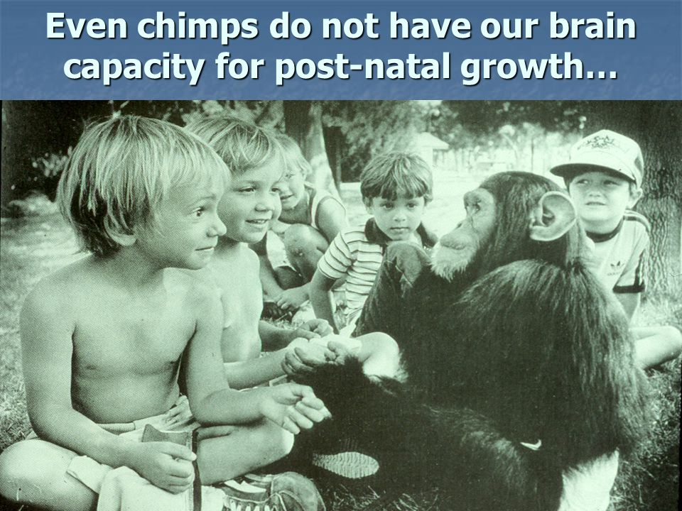 Even chimps do not have our brain capacity for post-natal growth…
