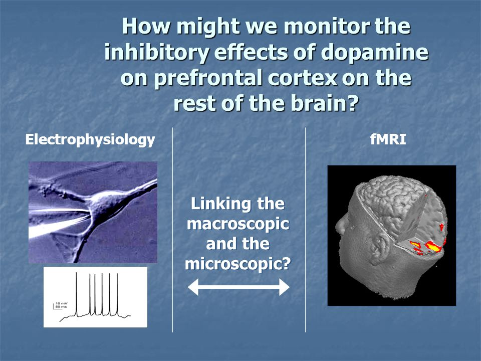 ElectrophysiologyfMRI Linking the macroscopic and the microscopic? Linking the macroscopic and the microscopic? How might we monitor the inhibitory ef