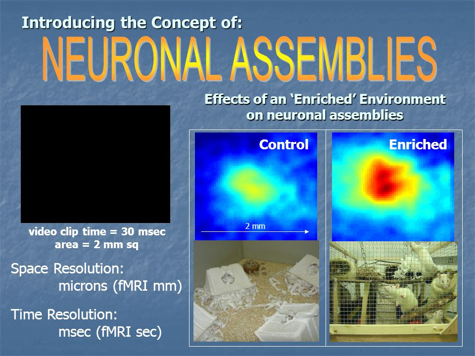 Introducing the Concept of: Space Resolution: microns (fMRI mm) Time Resolution: msec (fMRI sec) video clip time = 30 msec area = 2 mm sq Enriched Control 2 mm Effects of an 'Enriched' Environment on neuronal assemblies
