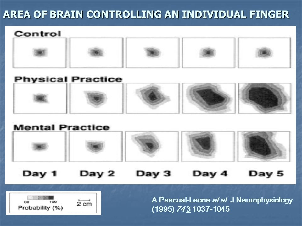 AREA OF BRAIN CONTROLLING AN INDIVIDUAL FINGER A Pascual-Leone et al J Neurophysiology (1995) 74 3 1037-1045