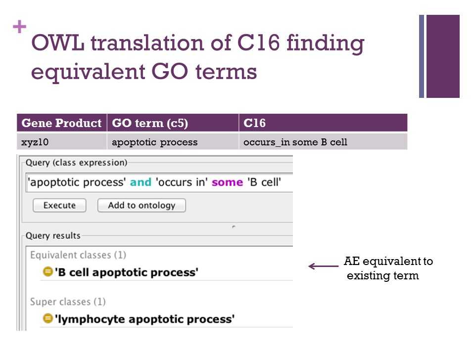 + Gene ProductGO term (c5)C16 xyz10apoptotic processoccurs_in some B cell AE equivalent to existing term OWL translation of C16 finding equivalent GO