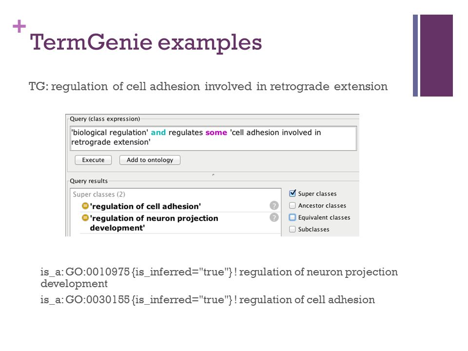 + TermGenie examples TG: regulation of cell adhesion involved in retrograde extension is_a: GO:0010975 {is_inferred=