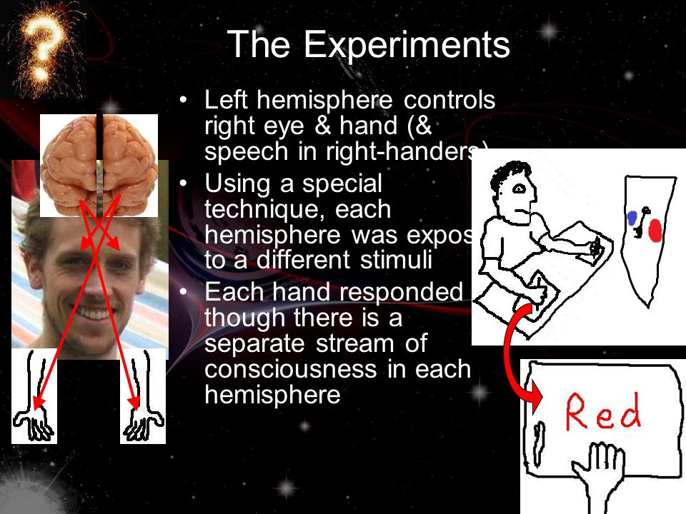 The Experiments Left hemisphere controls right eye & hand (& speech in right-handers) Using a special technique, each hemisphere was exposed to a diff