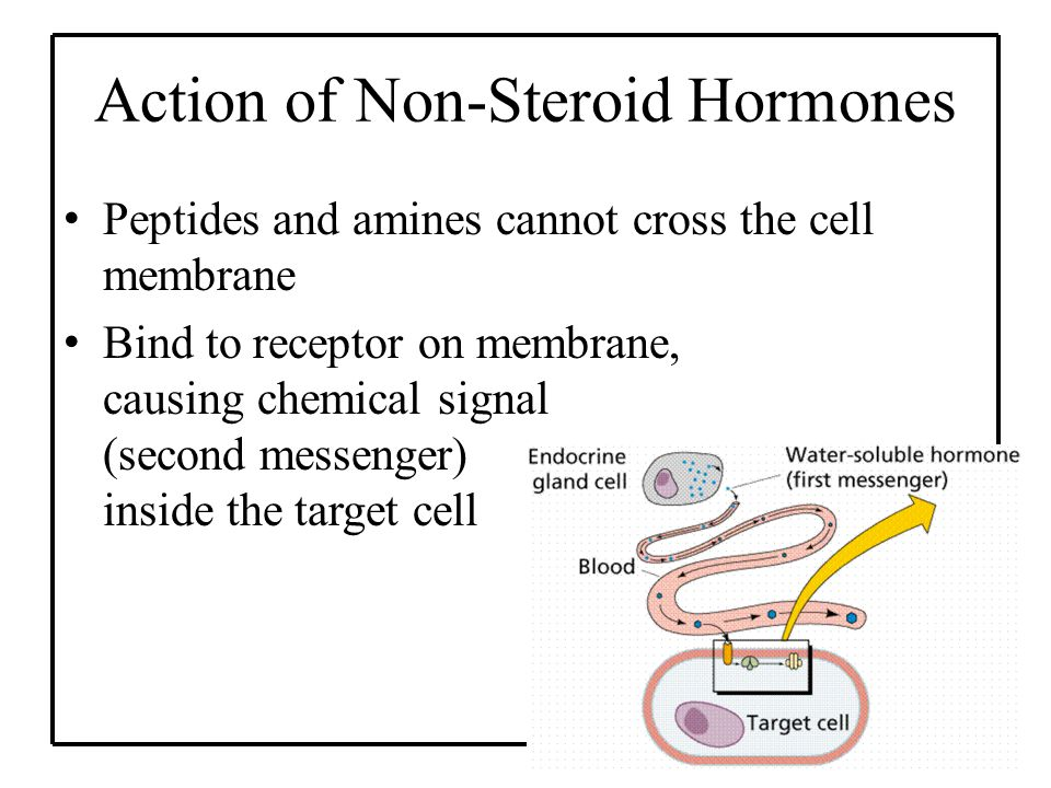 Action of Non-Steroid Hormones Peptides and amines cannot cross the cell membrane Bind to receptor on membrane, causing chemical signal (second messenger) inside the target cell