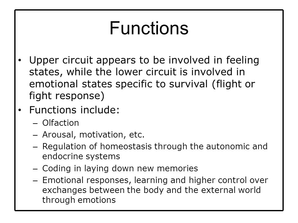 Functions Upper circuit appears to be involved in feeling states, while the lower circuit is involved in emotional states specific to survival (flight or fight response) Functions include: – Olfaction – Arousal, motivation, etc.