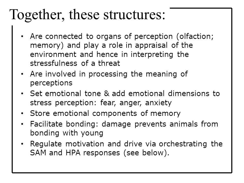 Are connected to organs of perception (olfaction; memory) and play a role in appraisal of the environment and hence in interpreting the stressfulness of a threat Are involved in processing the meaning of perceptions Set emotional tone & add emotional dimensions to stress perception: fear, anger, anxiety Store emotional components of memory Facilitate bonding: damage prevents animals from bonding with young Regulate motivation and drive via orchestrating the SAM and HPA responses (see below).