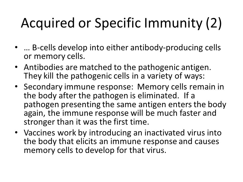 Acquired or Specific Immunity (2) … B-cells develop into either antibody-producing cells or memory cells.