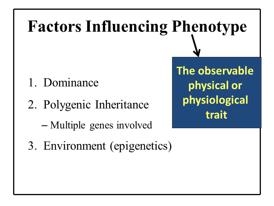 Factors Influencing Phenotype 1.Dominance 2.Polygenic Inheritance – Multiple genes involved 3.Environment (epigenetics) The observable physical or physiological trait