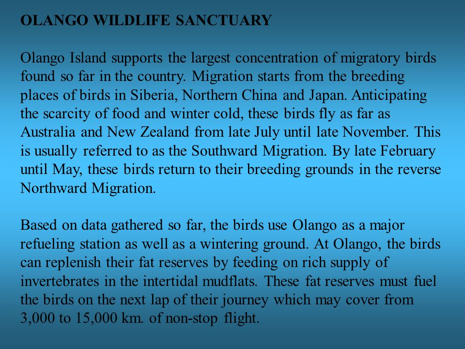 OLANGO WILDLIFE SANCTUARY Olango Island supports the largest concentration of migratory birds found so far in the country.