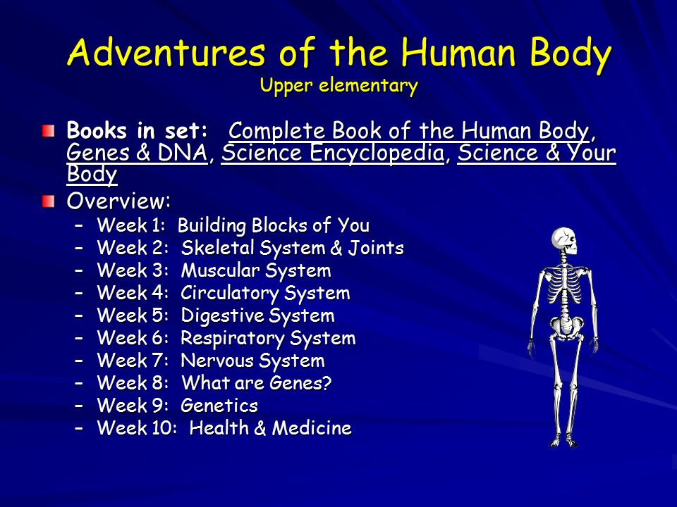 Adventures of the Human Body Upper elementary Books in set: Complete Book of the Human Body, Genes & DNA, Science Encyclopedia, Science & Your Body Overview: –Week 1: Building Blocks of You –Week 2: Skeletal System & Joints –Week 3: Muscular System –Week 4: Circulatory System –Week 5: Digestive System –Week 6: Respiratory System –Week 7: Nervous System –Week 8: What are Genes.