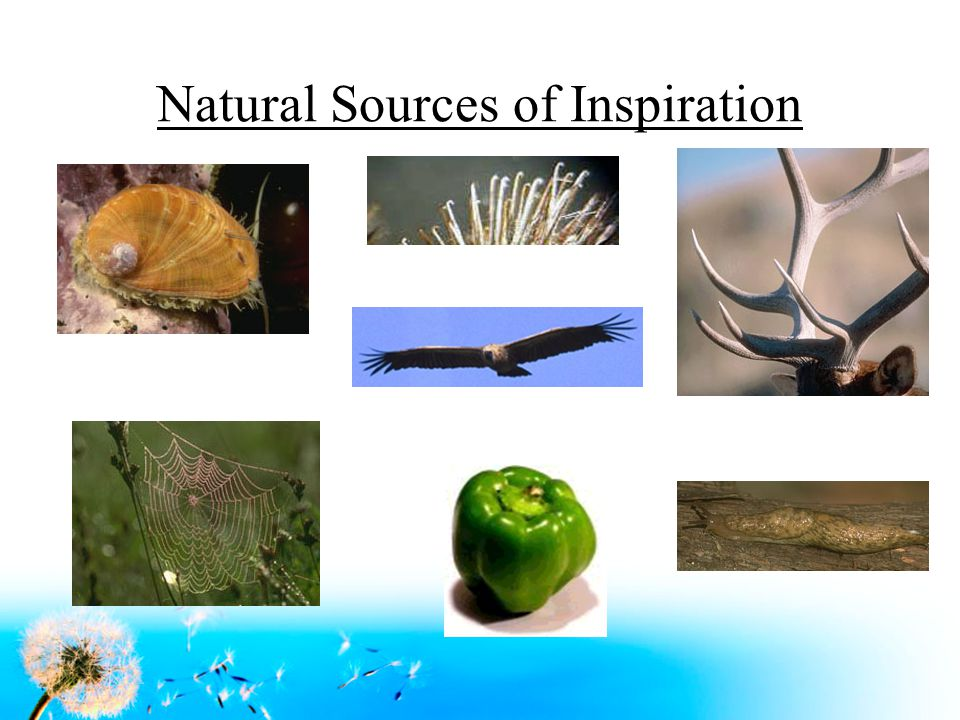 Natural Sources of Inspiration