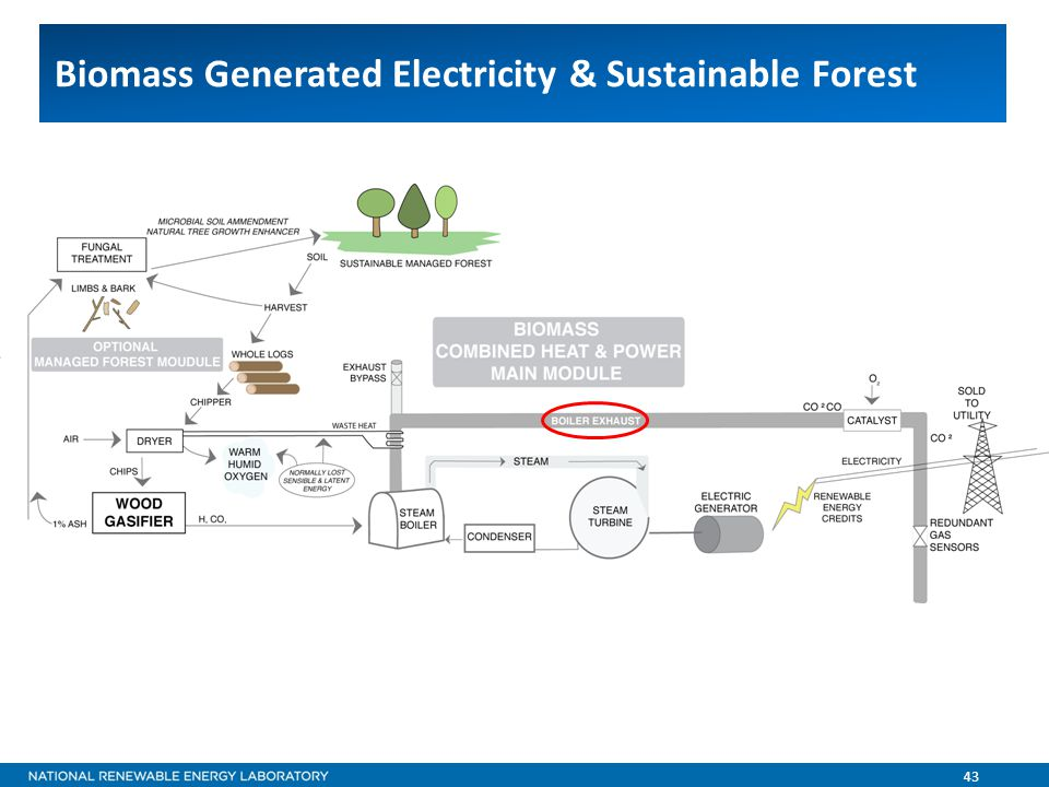 43 Biomass Generated Electricity & Sustainable Forest