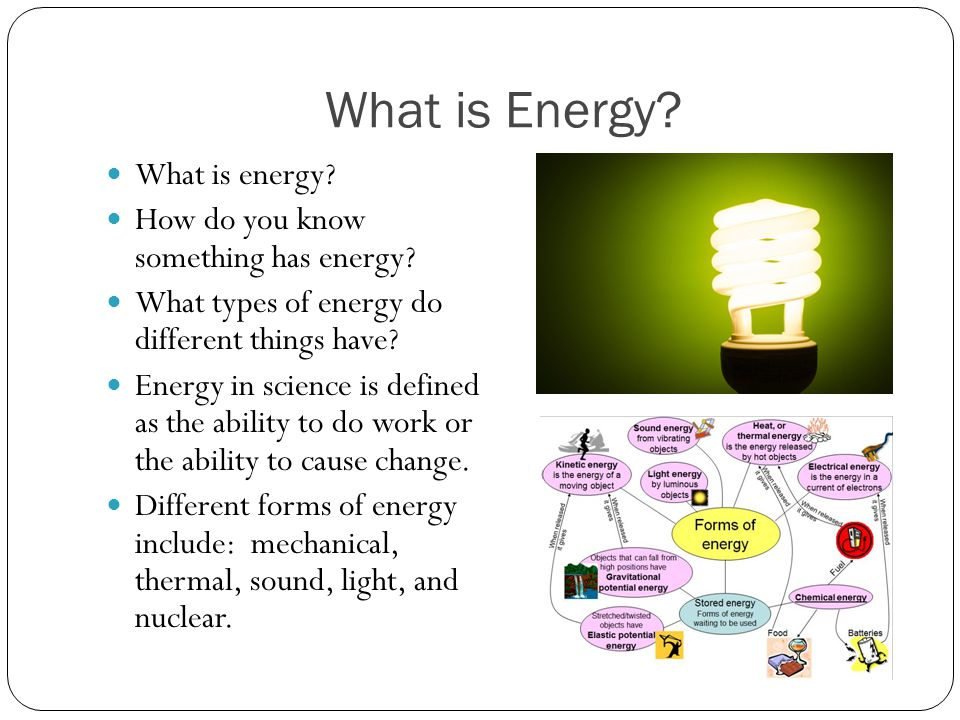 Another Energy Pyramid Which level has the most energy.