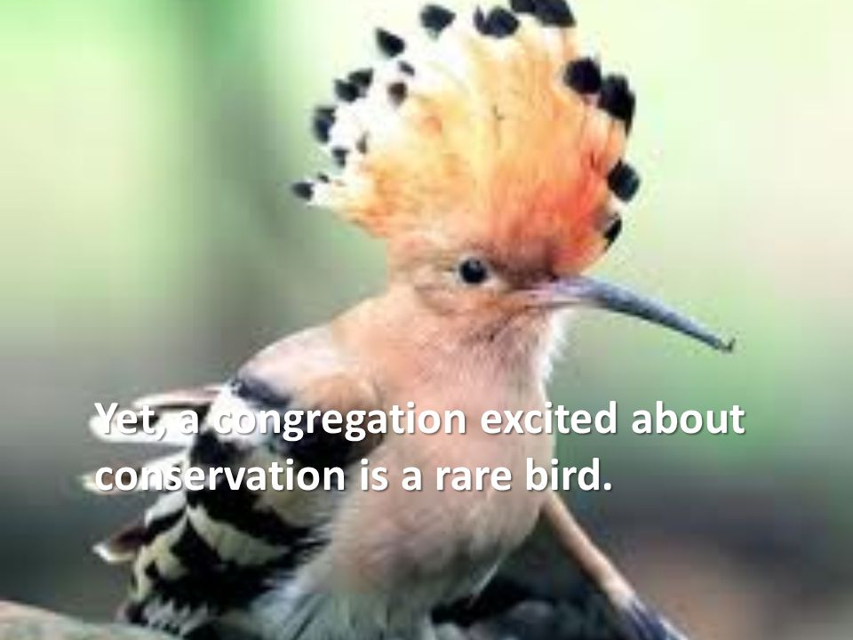 Yet, a congregation excited about conservation is a rare bird.