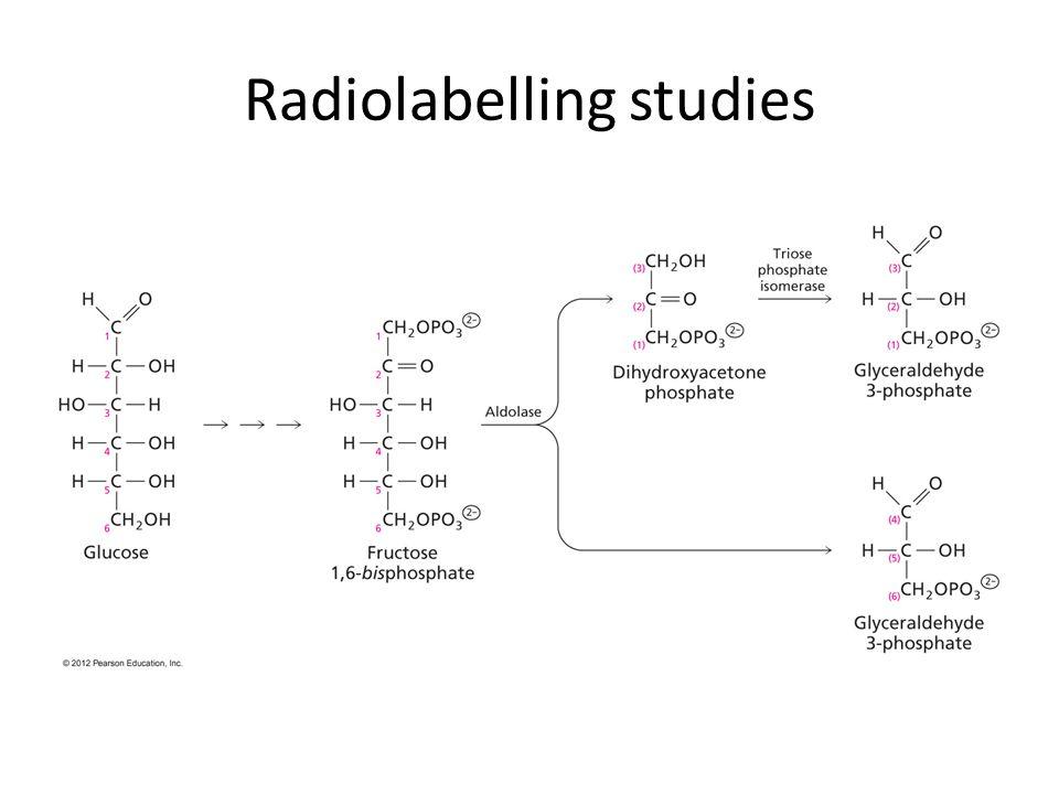 Radiolabelling studies