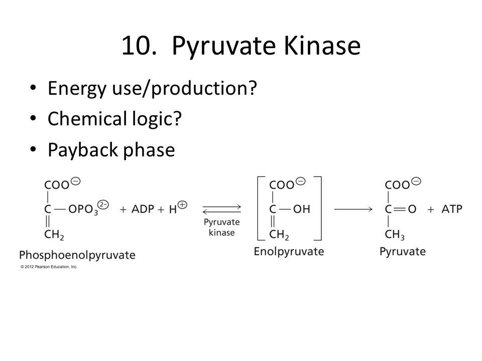 10. Pyruvate Kinase Energy use/production? Chemical logic? Payback phase