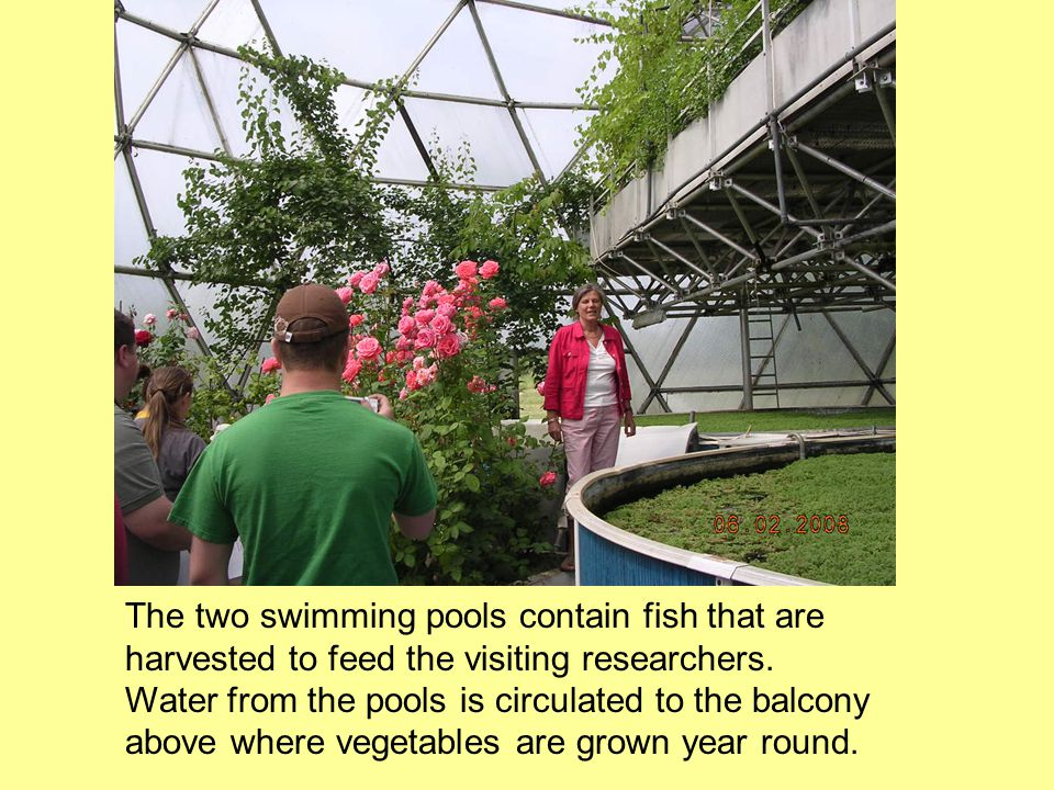 The two swimming pools contain fish that are harvested to feed the visiting researchers.