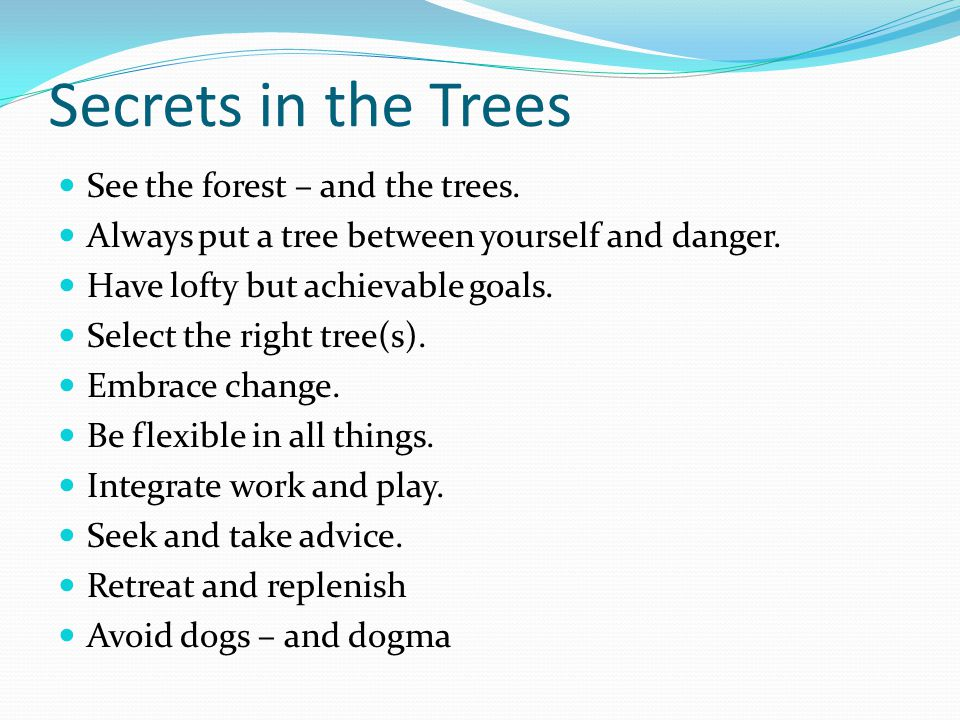Secrets in the Trees See the forest – and the trees.